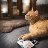 Canadian cat speelkussen punkte met catnip zwart / wit_