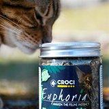 Croci euphoria catnip pot_
